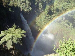 waterfall rainbow palm catarata del toro