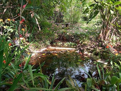 Frog pond Catarata Del Toro